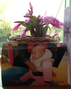 The Christmas cactus with the first picture we ever saw of our daughter.